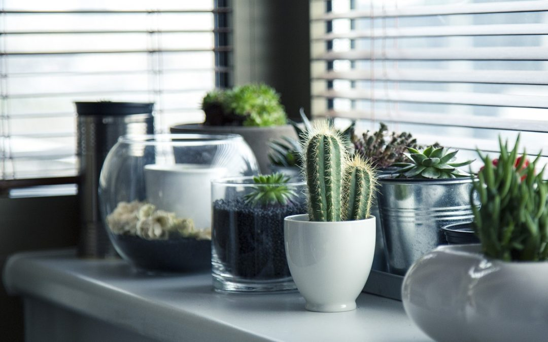 Plants in Kitchens